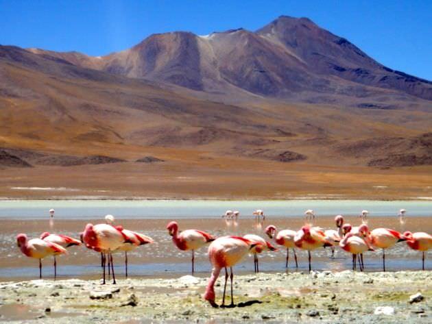 Flamingos Bolivian Salt Flats