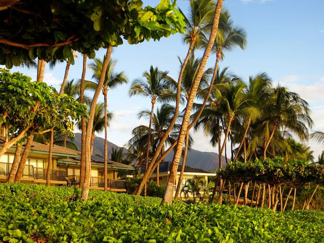 Which Hawaiian Island to Visit Lahaina