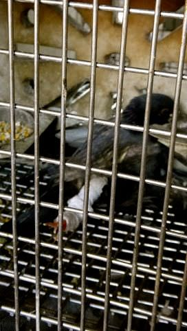 Bird Hospital Cage Weirdest Places on Earth
