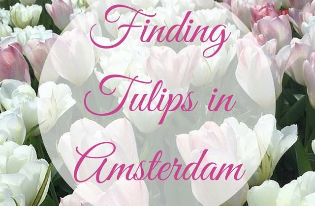 Finding Tulips in Amsterdam