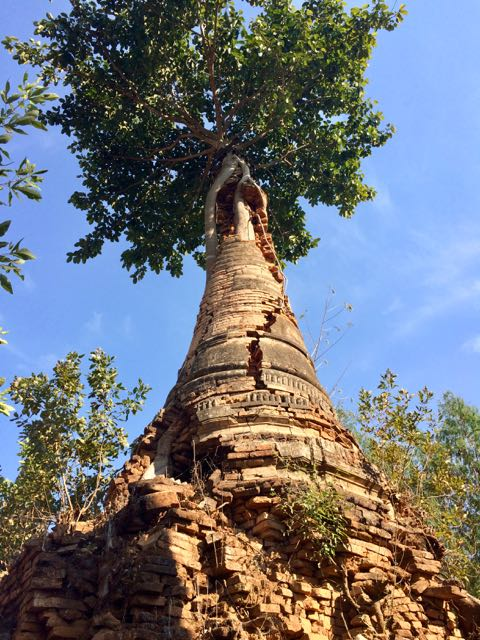 Inle Lake Tour Shwe Indein Pagoda tree