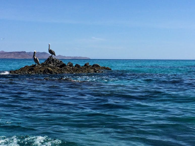 Isla Espiritu Santo Tour Swimming with Sea Lions in Mexico birds