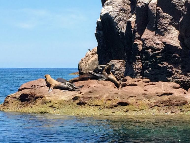 Isla Espiritu Santo Tour Swimming with Sea Lions in Mexico sea lion in sun
