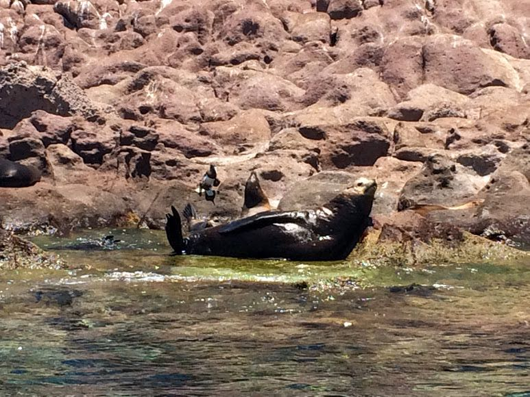 Isla Espiritu Santo Tour Swimming with Sea Lions in Mexico - sea lion rock