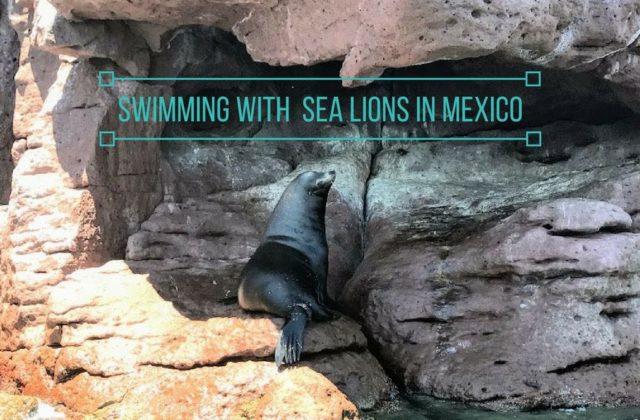 Swimming with Sea Lions in Mexico – Isla Espiritu Santo Tour