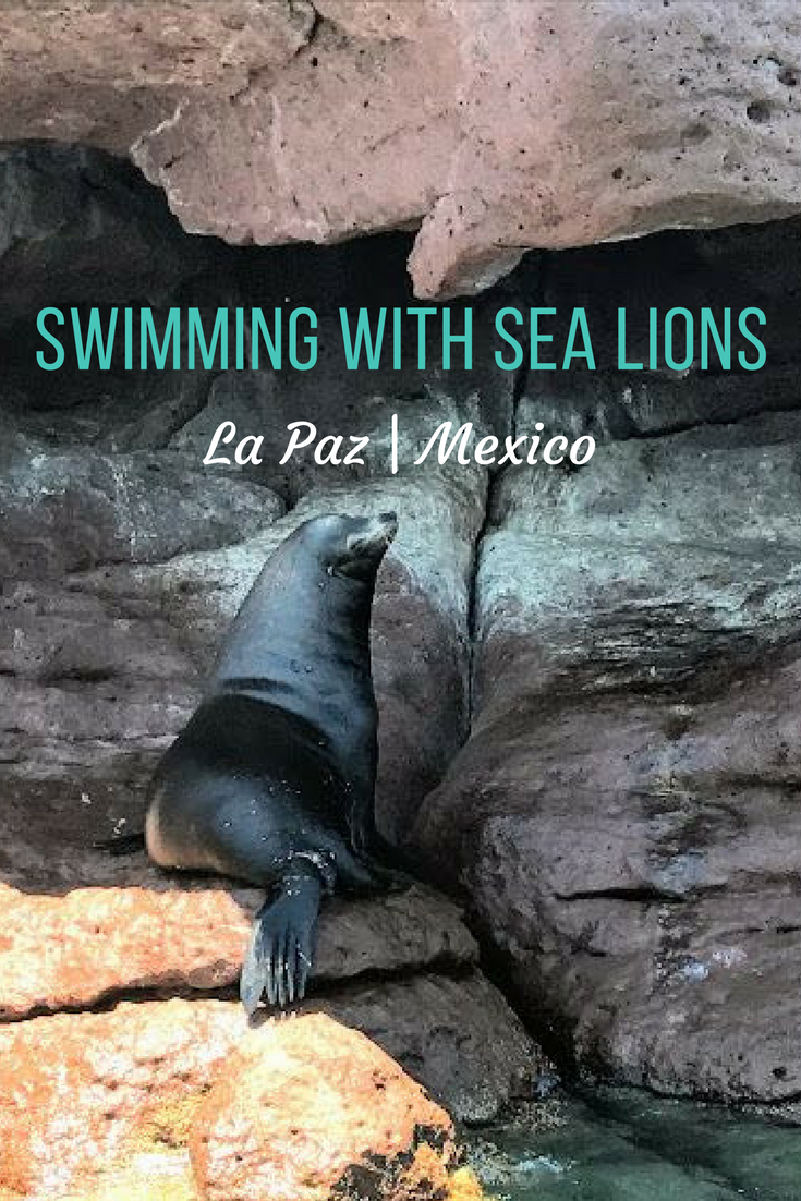 Take an Isla espiritu Santo tour from La Paz to go swimming with sea lions in Mexico. Tips on which tour, what you'll see and where to stay.