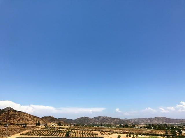 Ensenada Wine Tasting Tour