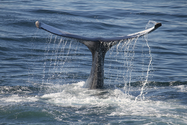 Things to do in La Paz Mexico Whale Watching
