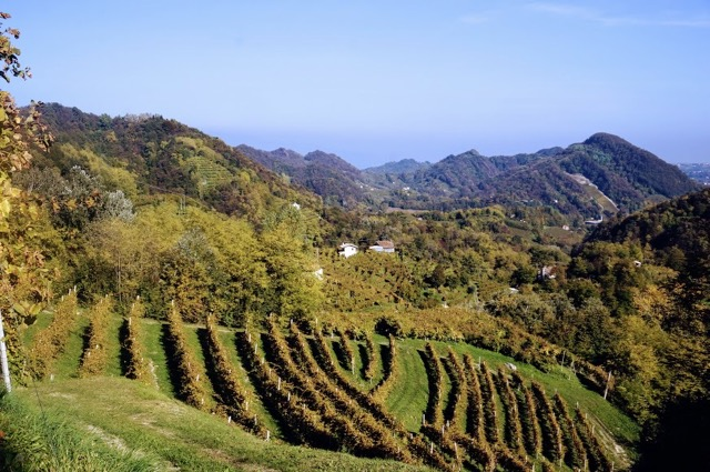 Wine tour from Venice Italy's Prosecco Region One hour from Venice