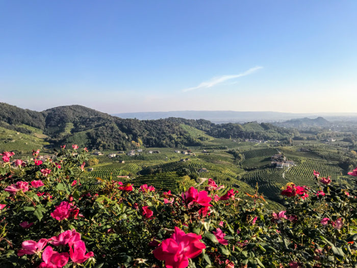 Wine tour from Venice Prosecco Region Visit Prosecco Italy Flowers and Views