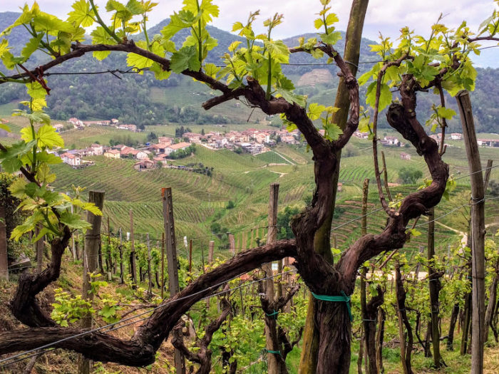 Italys prosecco region is just one hour from venice did you know book it yourself for a fraction of the cost solutioingenieria Choice Image