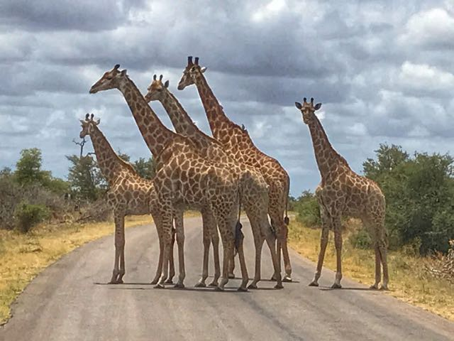 Safari packing lists - giraffe