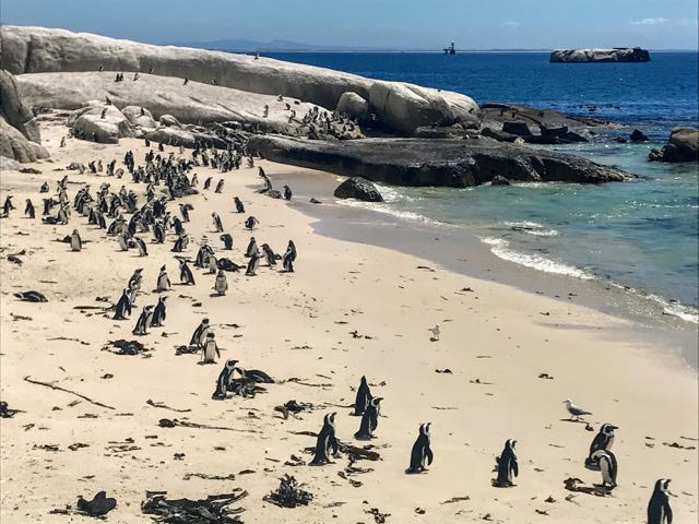 Best Cities with Beaches - Cape Town