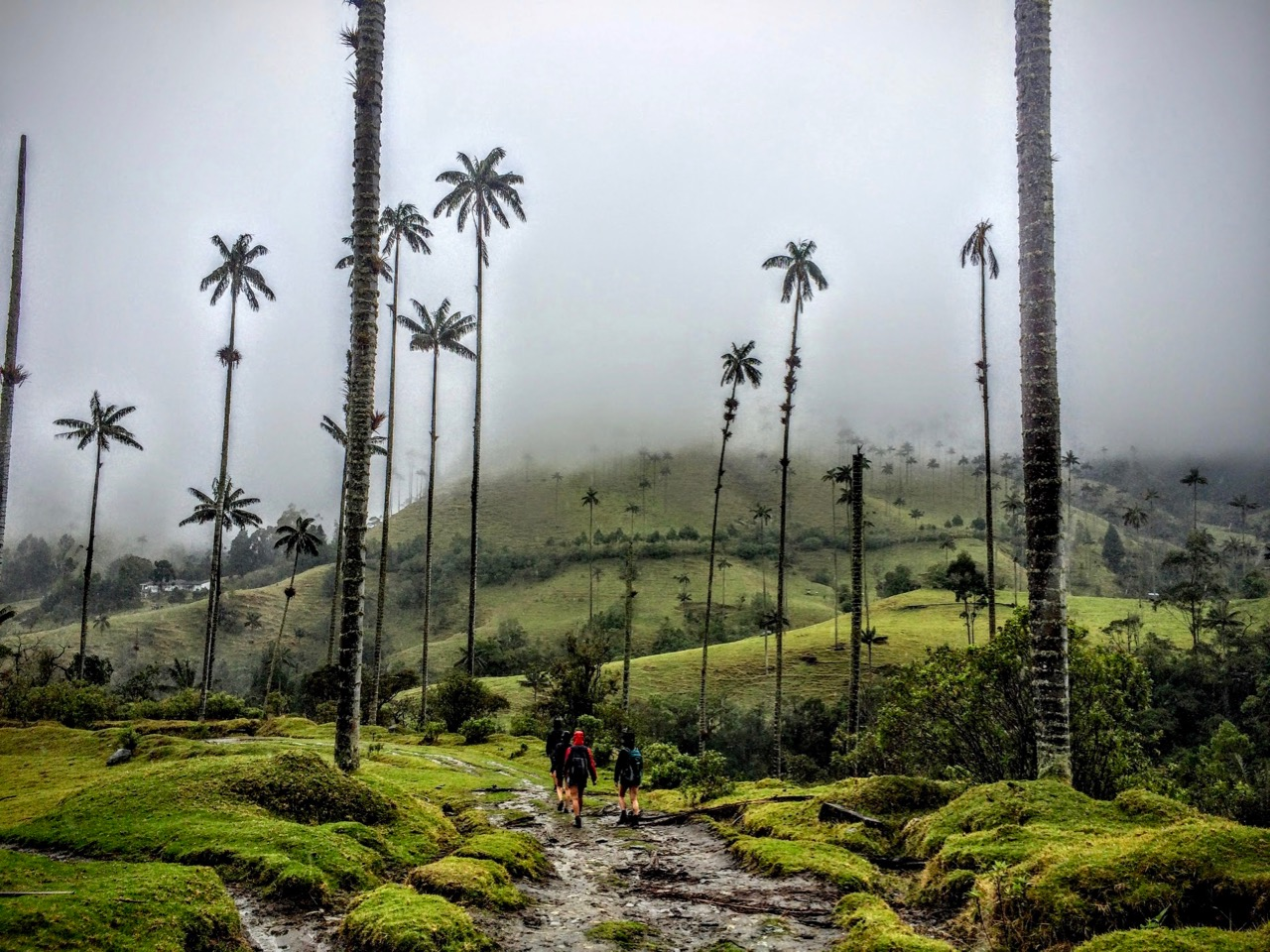 Hiking in Cocoa Valley in Colombia before my ACL surgery recovery
