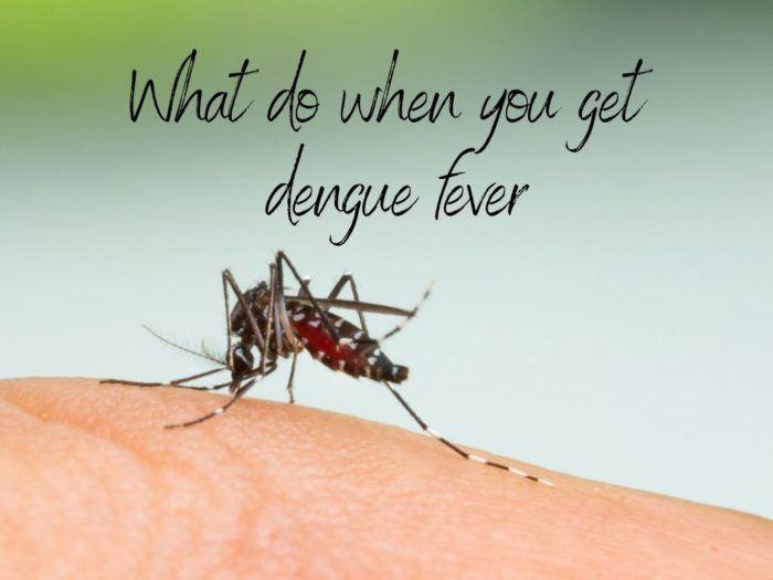 What to do when you get dengue fever when you travel main