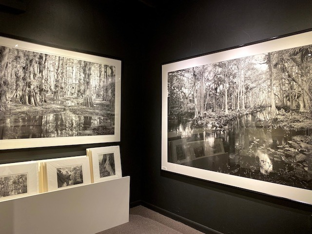 Things To Do In the everglades Big Cypress Gallery
